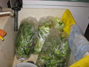 Healthy Veggie Scraps