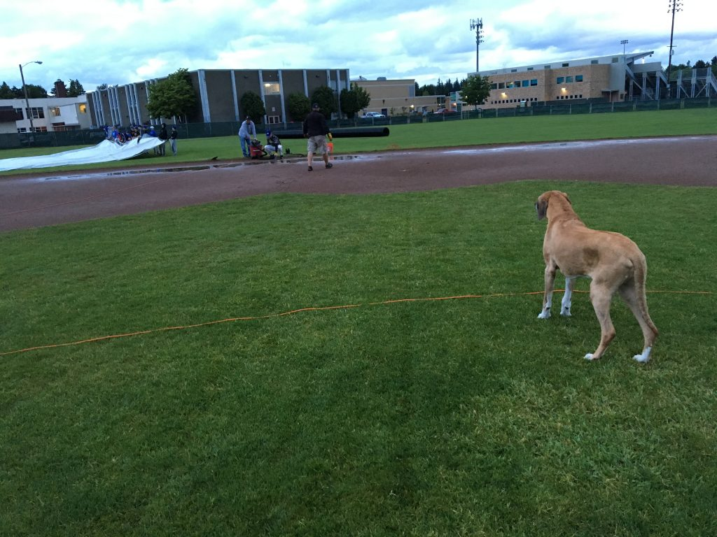 Moe, a huge baseball fan, overseeing the team