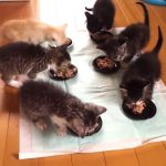 Cats eating raw meat