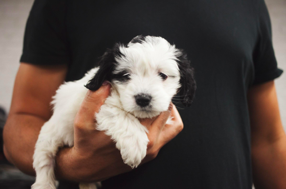Guest Post: 5 Tips for First-Time Pet Owners - Moe's Meats