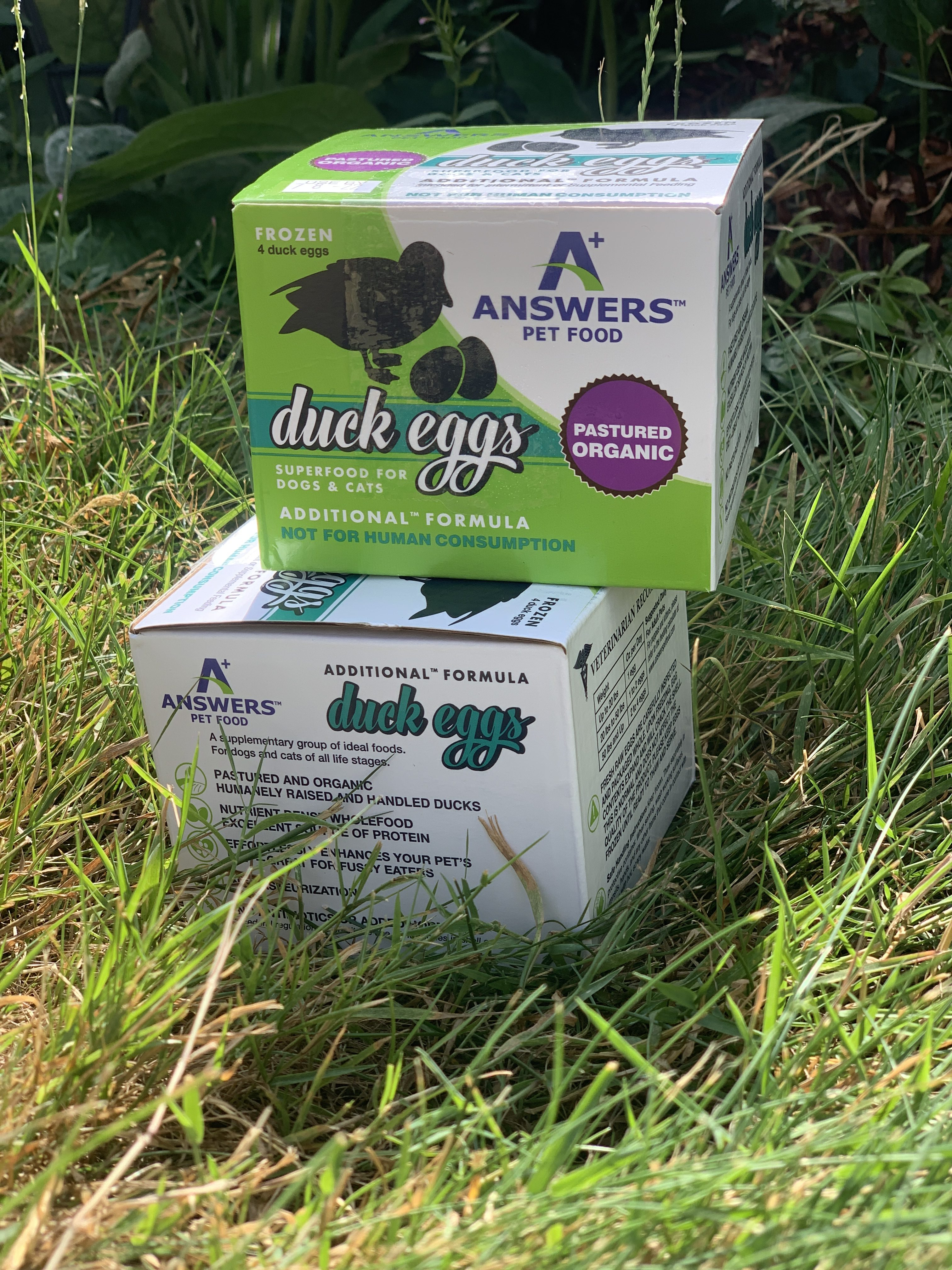Organic Duck Eggs for Pets